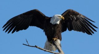 cropped-bald-eagle.jpg