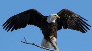 cropped-bald-eagle.jpg